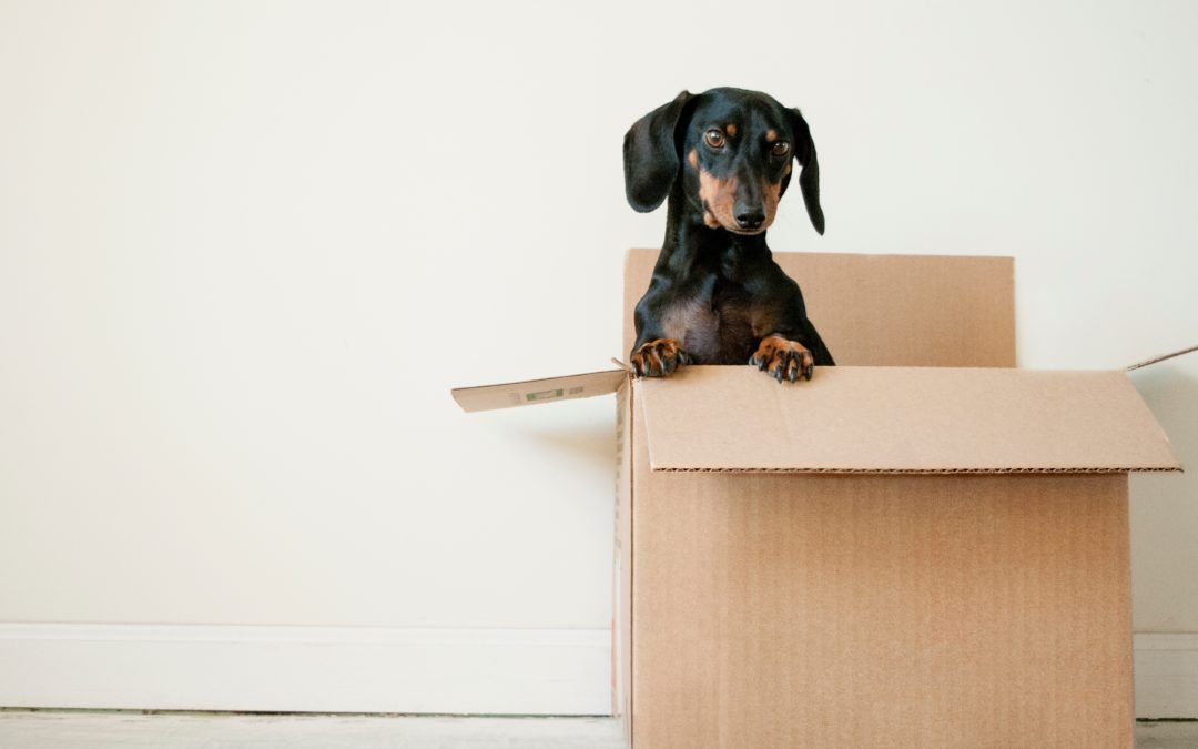 Is Moving Insurance necessary?