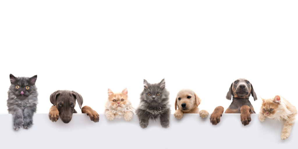 Your Complete Guide to Renting with Pets
