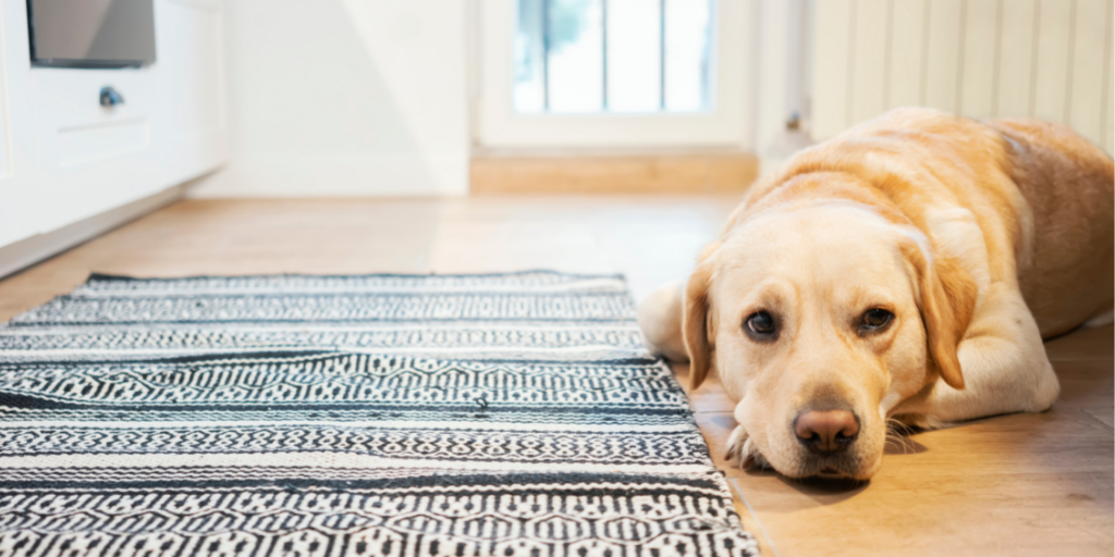 Why Leaving Your Four-Legged Friend at Home for too Long Isn't the Best Idea